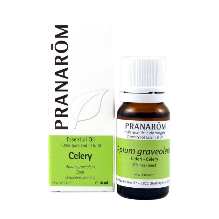 Celery Chemotyped Essential Oil, Best Quality Essential OilsOnline